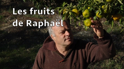 Les fruits de Raphaël