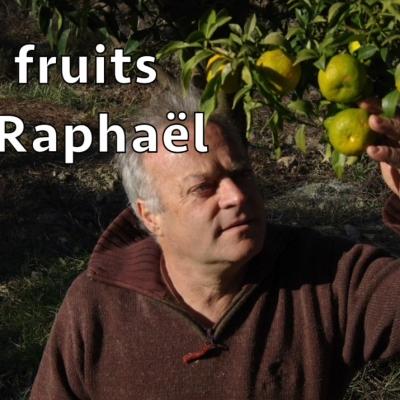 Les fruits de Raphaël